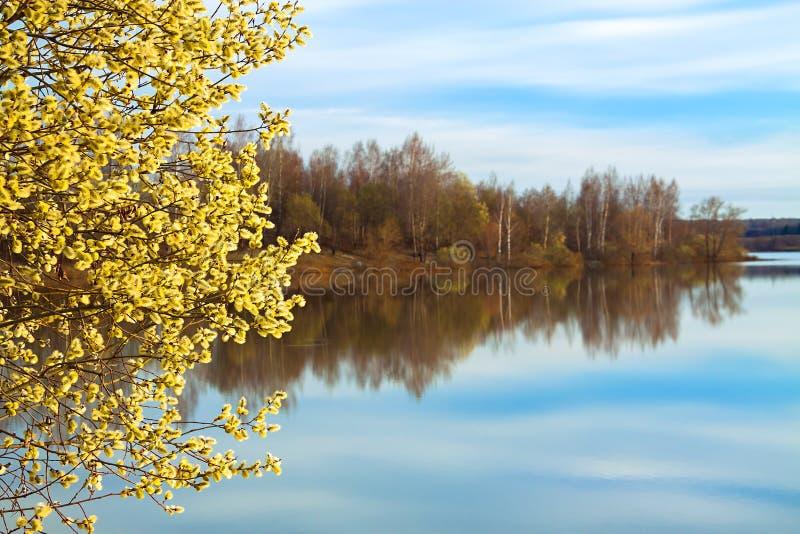 Ландшафт весны с blossoming деревом и рекой стоковая фотография rf