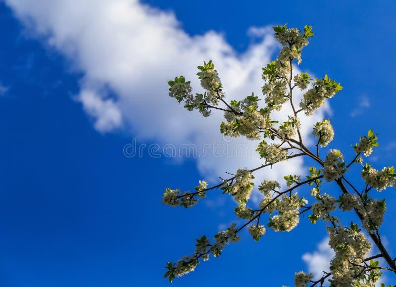 Ландшафт весны, цветения яблока в саде стоковые изображения