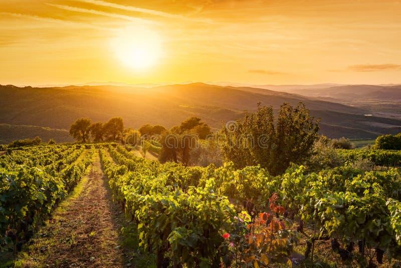 Ландшафт виноградника в Тоскане, Италии Ферма вина на заходе солнца стоковые фото