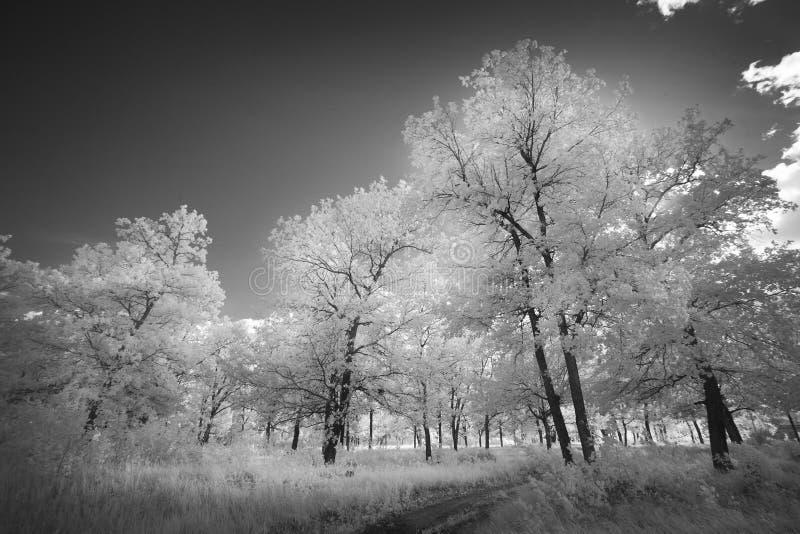 Ландшафт в инфракрасном свете стоковое изображение rf