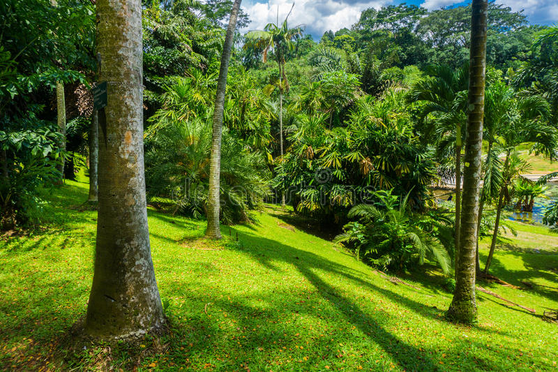 Ландшафт в холме при большие и высокие дерево, кусты и фото зеленой травы принятое в Kebun Raya Bogor Индонезию стоковое фото