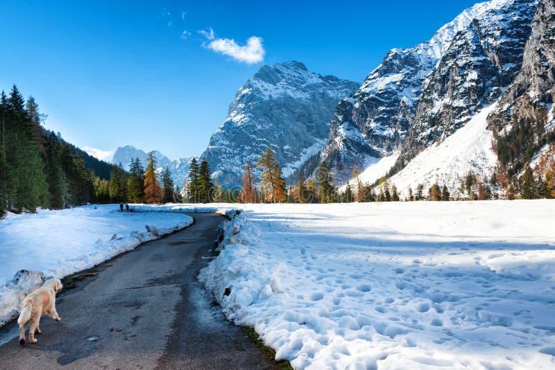 Ландшафт горы Альпов в последнем сезоне осени Зима падения снега предыдущая и последняя осень стоковое изображение rf