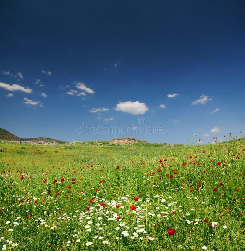 Ландшафт горы весны в Турции стоковые изображения