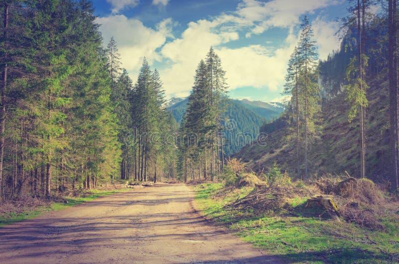 Ландшафт горы весны солнечный в винтажном стиле стоковые изображения