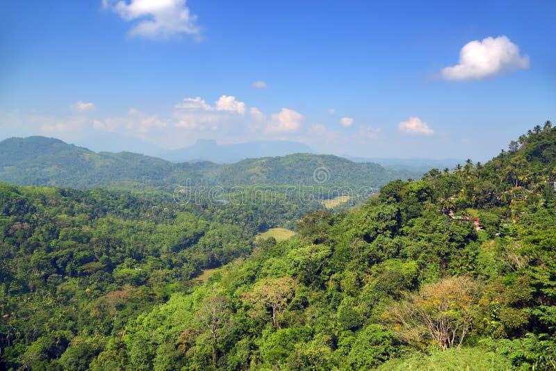 Ландшафт горы в Шри-Ланке стоковая фотография rf