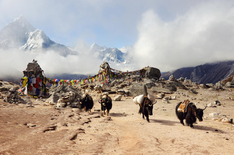Ландшафт горы Гималаев Яки на пропуске Восточный Непал стоковые изображения