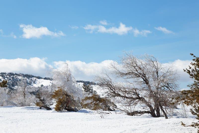 Ландшафт горы зимы с облаком неба сосны снега стоковое изображение rf