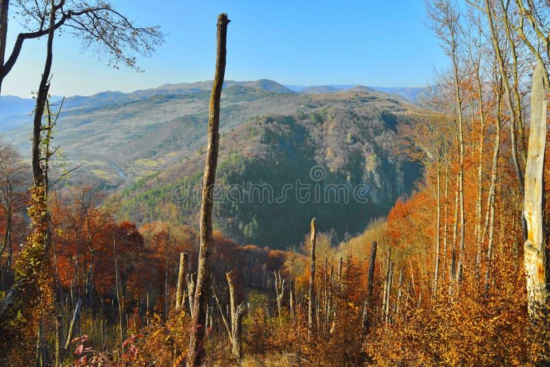 Ландшафт горы при деревья сломанные штормом в осени стоковое изображение