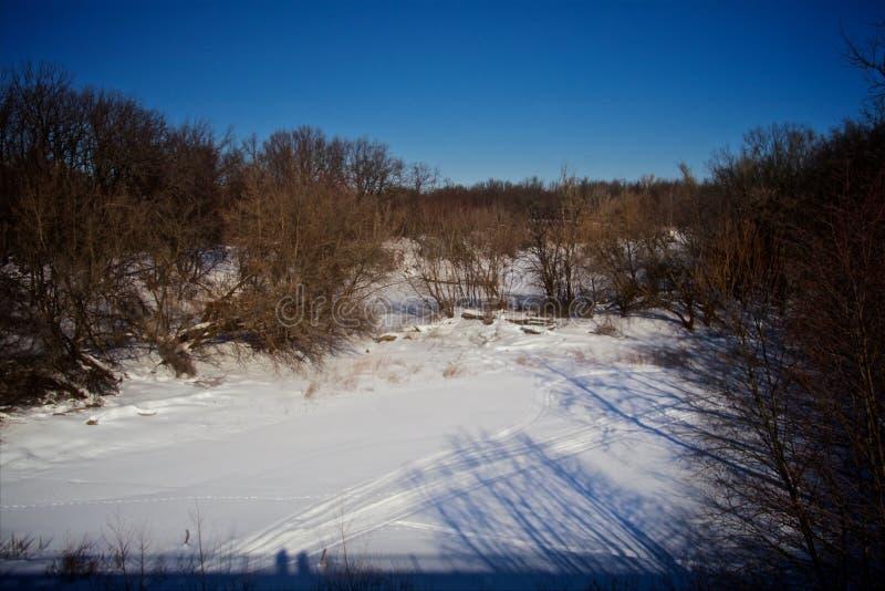 Ландшафт леса зимы в солнечном дне стоковое изображение rf
