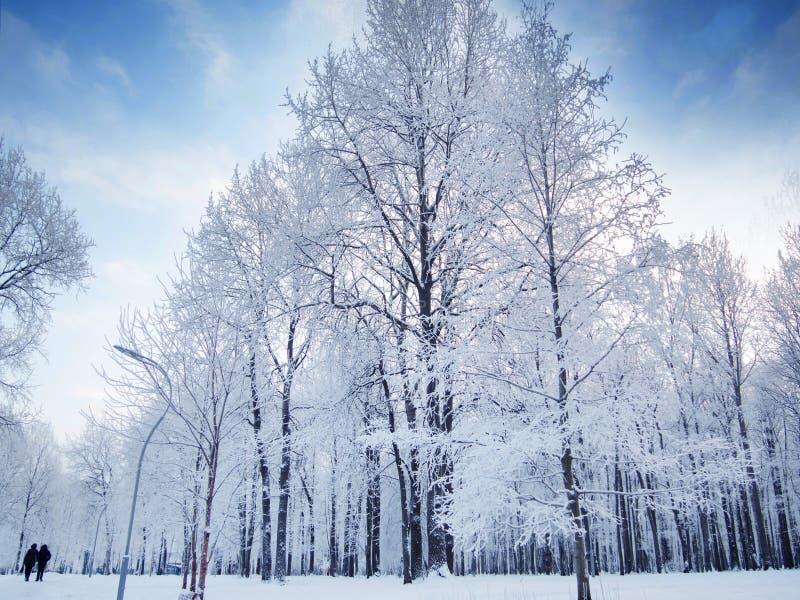 Ландшафт леса зимы, красивая природа, деревья предусматриванные с заморозком стоковая фотография rf