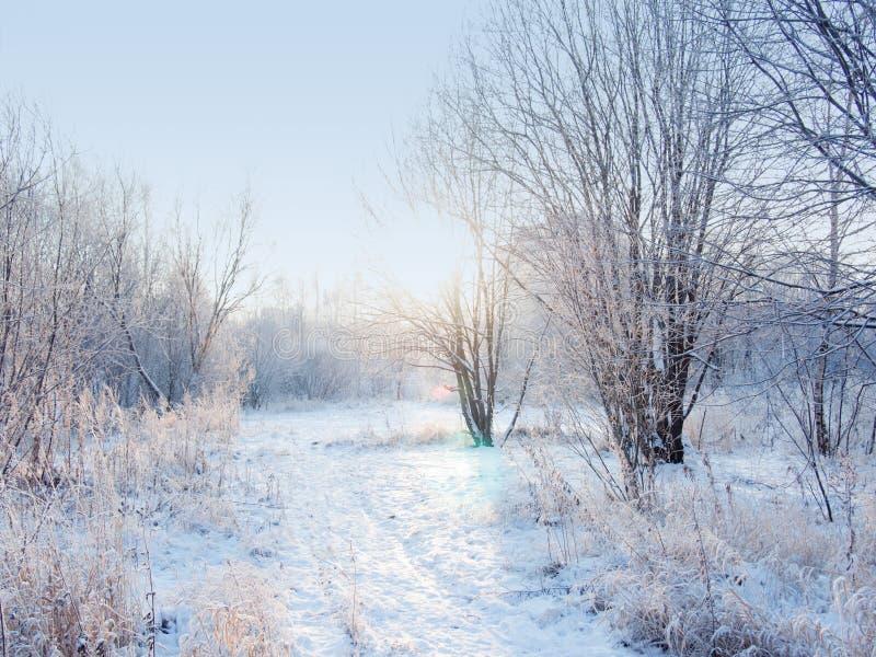 Ландшафт леса зимы, красивая природа, деревья предусматриванные с заморозком стоковая фотография
