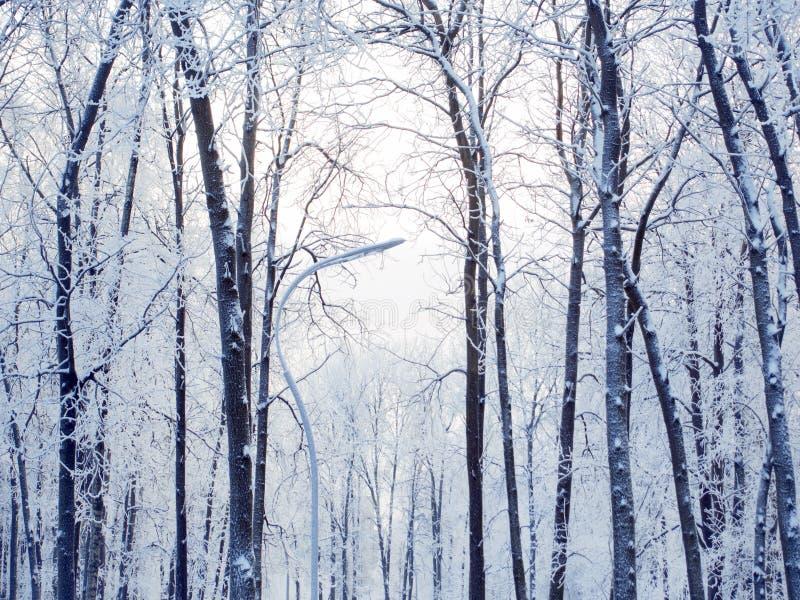 Ландшафт леса зимы, красивая природа, деревья предусматриванные с заморозком стоковые фото