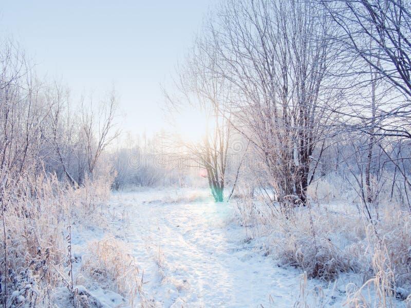 Ландшафт леса зимы, красивая природа, деревья предусматриванные с заморозком стоковое фото rf