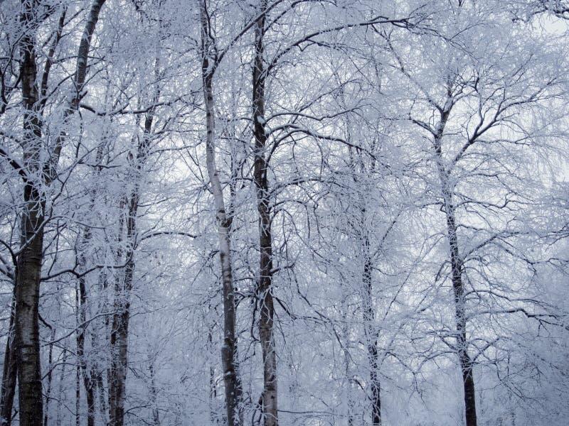 Ландшафт леса зимы, красивая природа, деревья предусматриванные с заморозком стоковое изображение