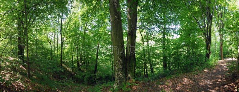 Ландшафт леса стоковое фото