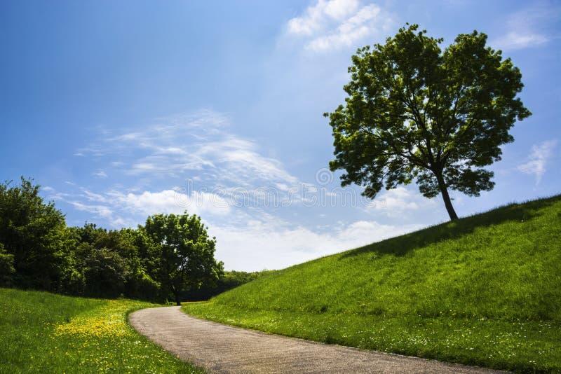 Ландшафт лета на полдне стоковое изображение