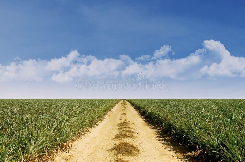 Ландшафт лета с зеленой травой и голубым небом стоковые фотографии rf