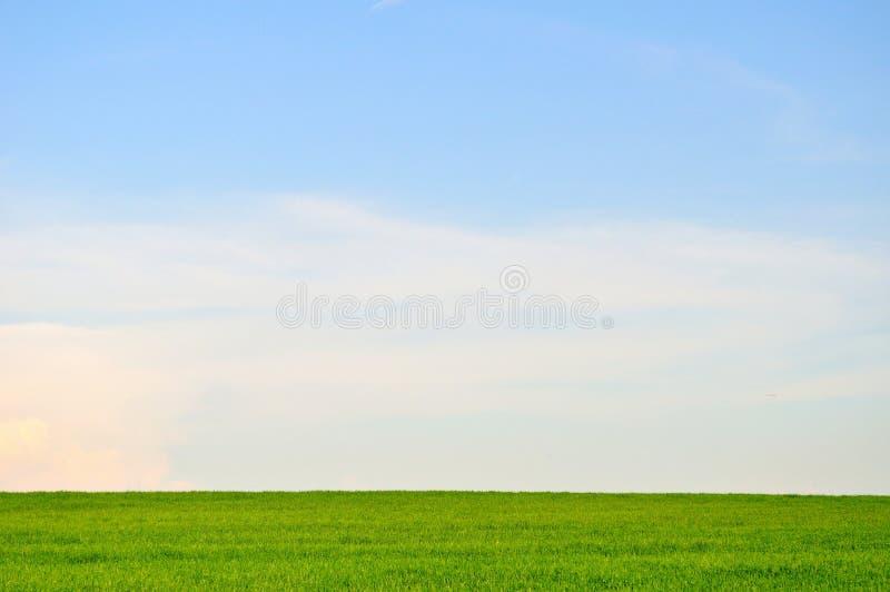 Ландшафт зеленого поля и голубого неба стоковая фотография