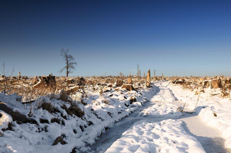 Ландшафт зимы, ветробой стоковые фотографии rf
