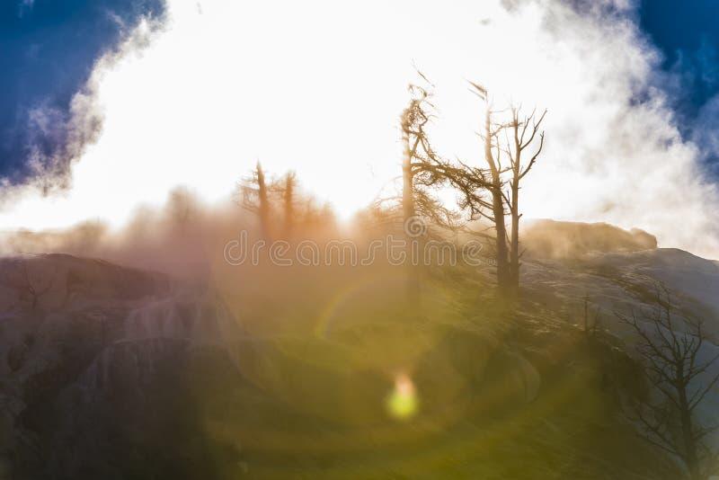 Ландшафт зимы Йеллоустона стоковые изображения rf