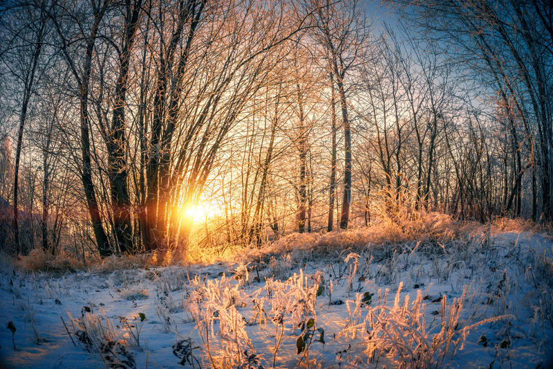 Ландшафт зимы на заходе солнца стоковое фото rf