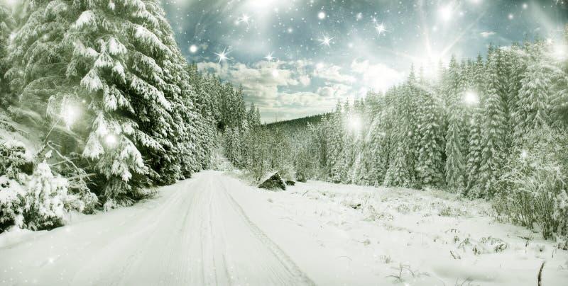 Ландшафт зимы - снег покрыл деревья и небо с звездами стоковая фотография