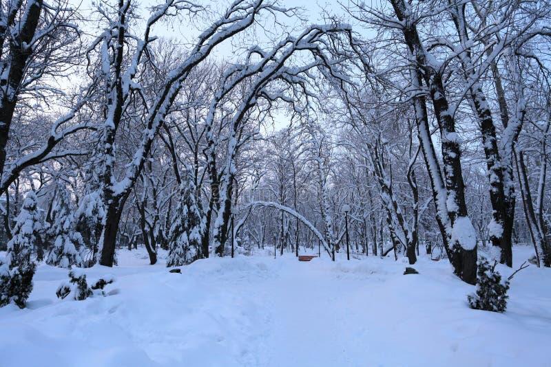 Ландшафт зимы с деревьями и снегом стоковое фото rf