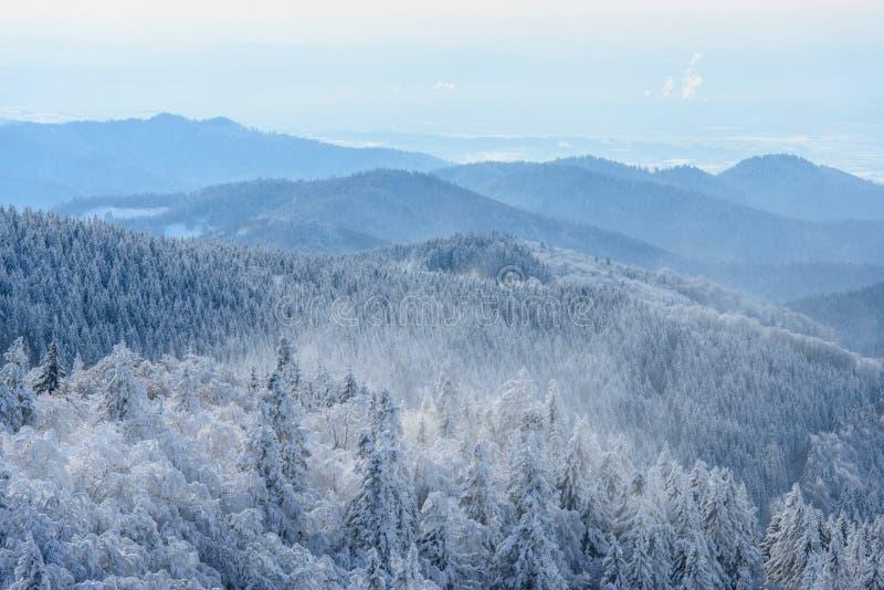 Ландшафт зимы с деревьями Snowy стоковое фото rf