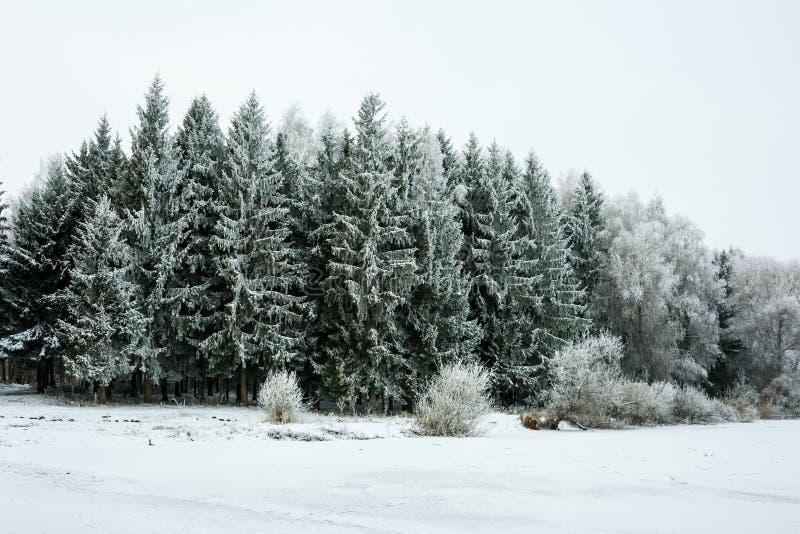 Ландшафт зимы с снежком и валами стоковые фотографии rf