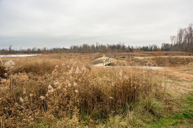 Ландшафт зимы с footbridge и прудом стоковое изображение