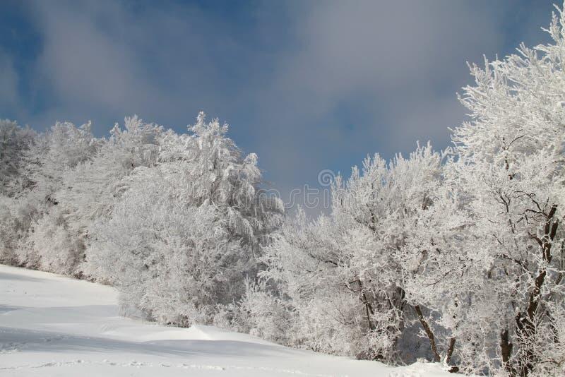 Ландшафт зимы стоковое изображение