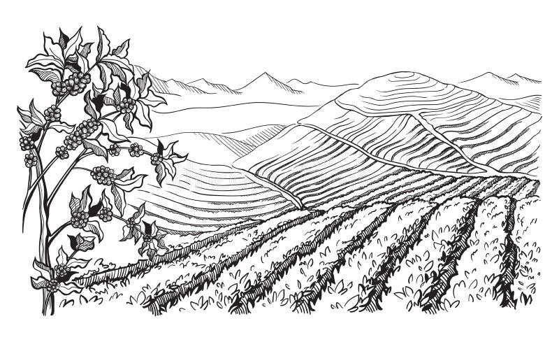 Ландшафт кофейной плантации иллюстрация штока