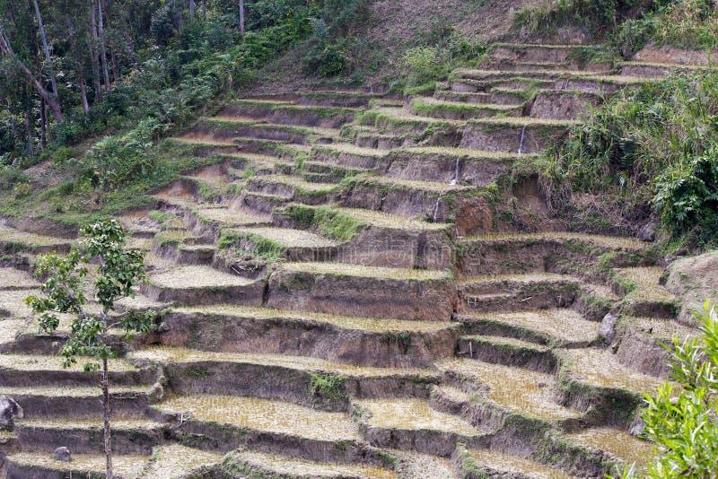 Ландшафт Мадагаскара, поля риса стоковая фотография rf