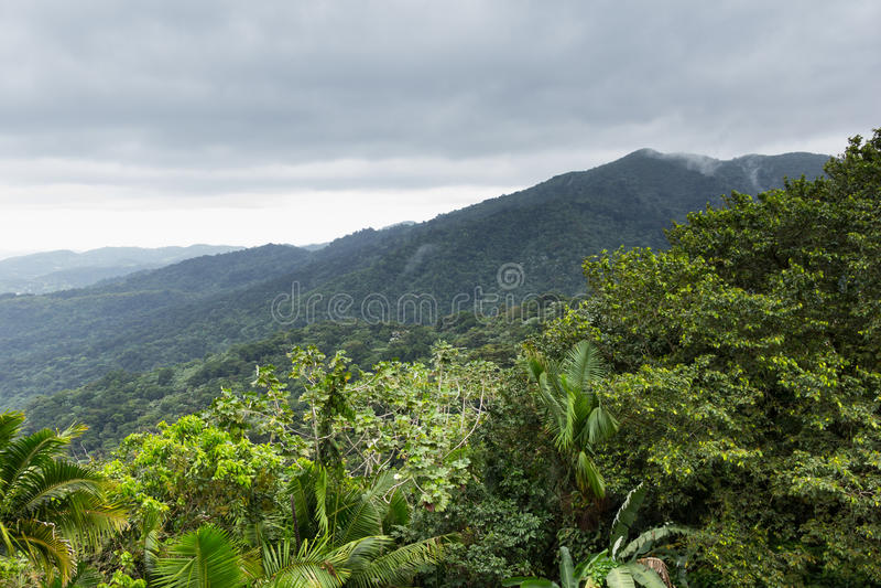 Ландшафт на дождевом лесе El Yunque национальном, Пуэрто-Рико, Соединенных Штатах стоковое изображение rf