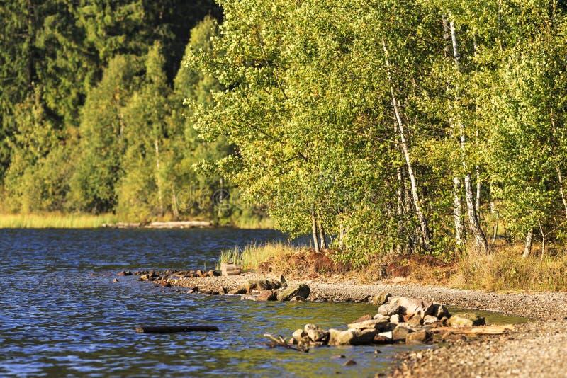 Ландшафт на озере в дневном свете стоковое изображение