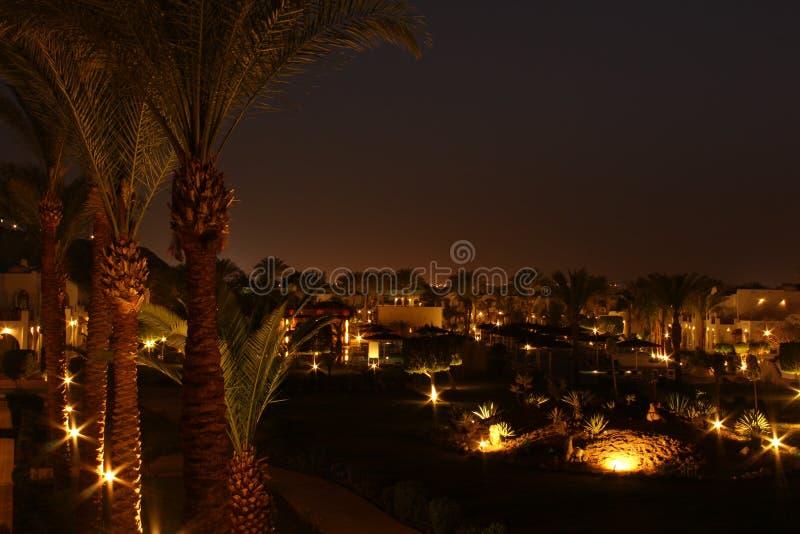 Ландшафт ночи с пальмами и фонариками стоковое фото rf