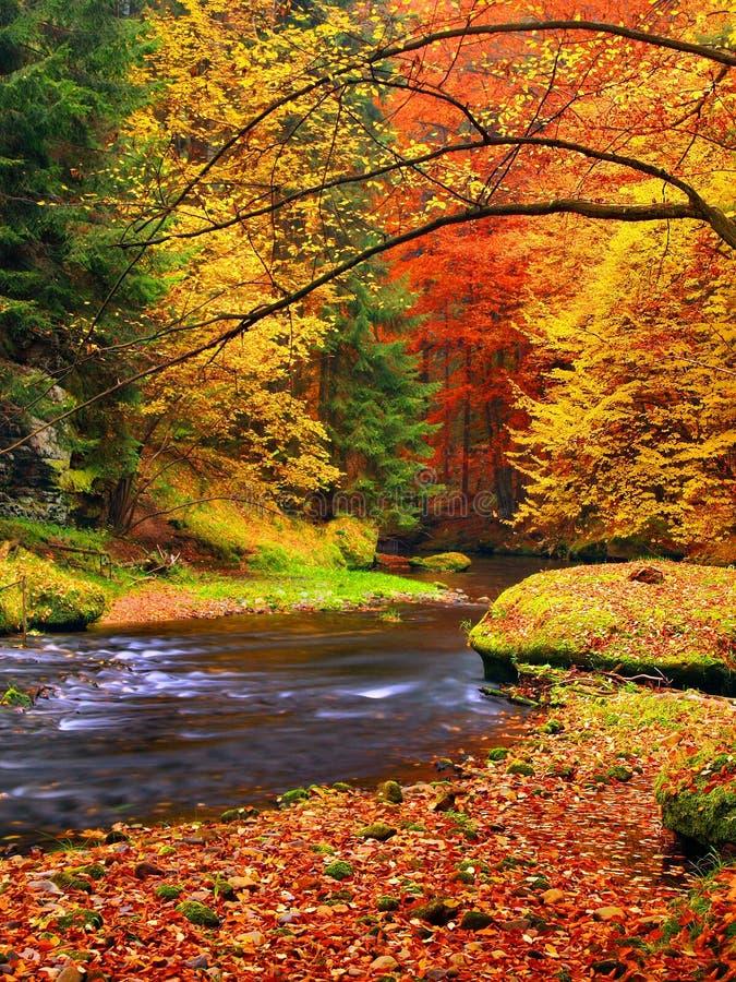 Ландшафт осени, красочные листья на деревьях, утре на реке после ненастной ночи. стоковое фото rf