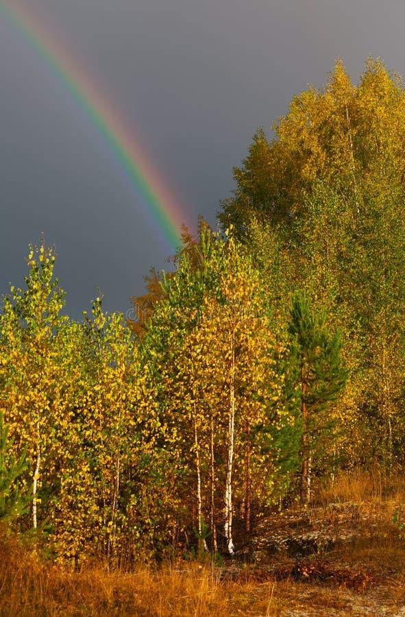 Ландшафт осени Радуга над лесом в небе стоковое изображение rf