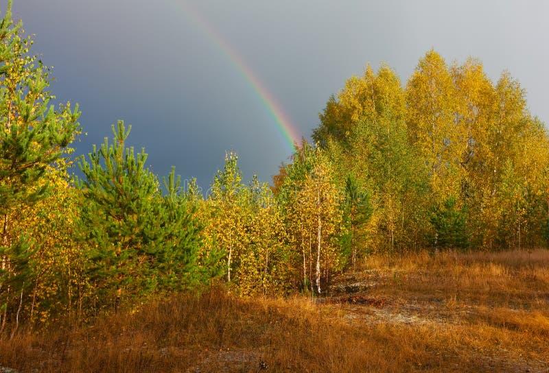 Ландшафт осени Радуга над лесом в небе стоковое изображение