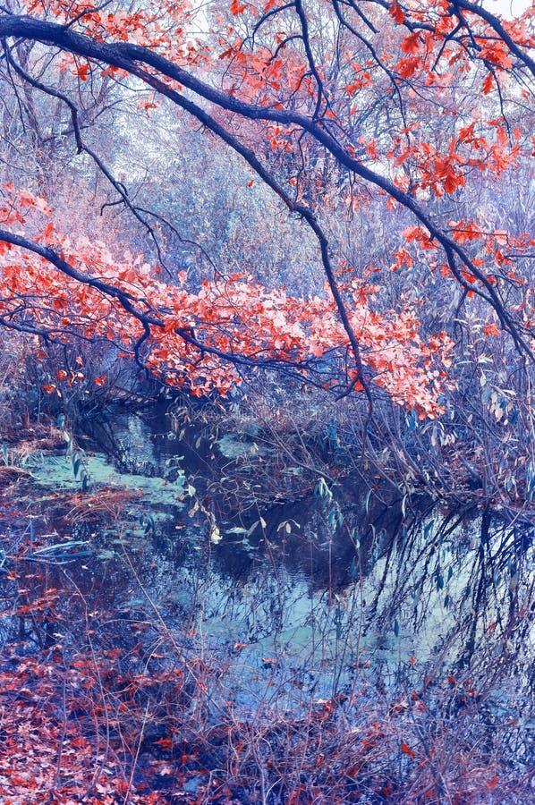Ландшафт осени с ветвями дуба над сухим старым прудом стоковые фотографии rf