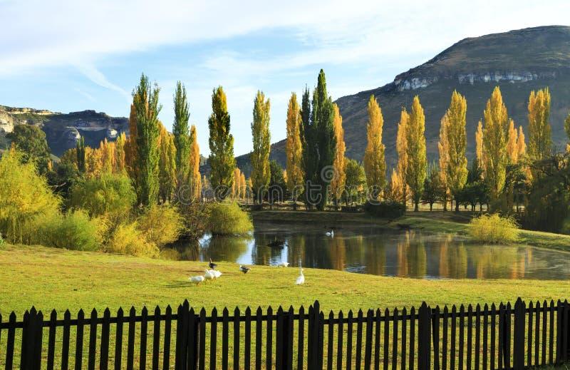 Ландшафт осени с желтыми деревьями и прудом стоковые фотографии rf