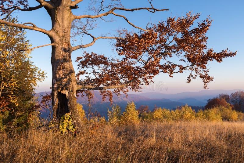 Ландшафт осени с красивым деревом бука стоковые фото