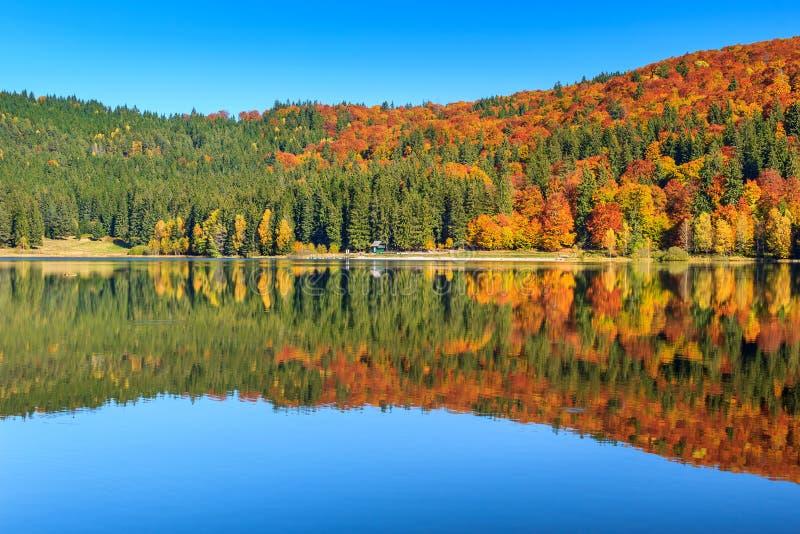 Ландшафт осени с красочным лесом, озером St Ана, Трансильванией, Румынией стоковая фотография rf