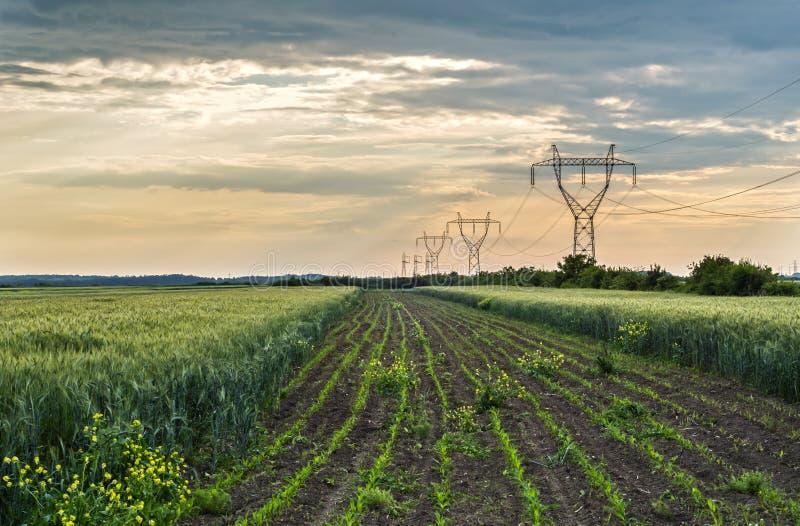 Ландшафт полей стоковое изображение rf