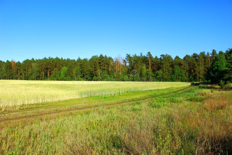 Ландшафт поля и леса стоковое изображение