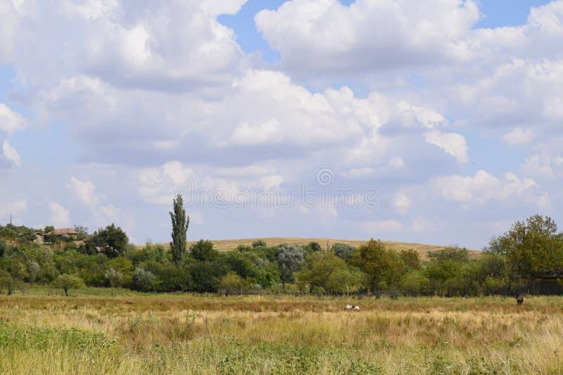 Ландшафт поля с холмом стоковое фото