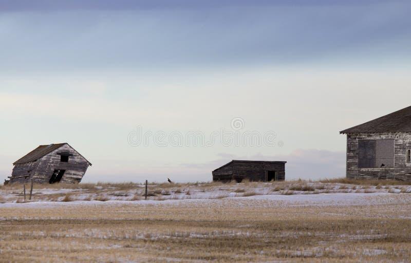 Ландшафт прерии в зиме стоковое изображение