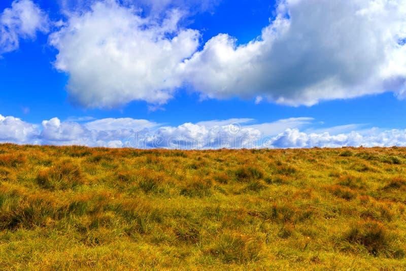 Ландшафт прикарпатских гор, желтая трава на холме под ярким голубым небом с облаками, Украиной стоковое изображение