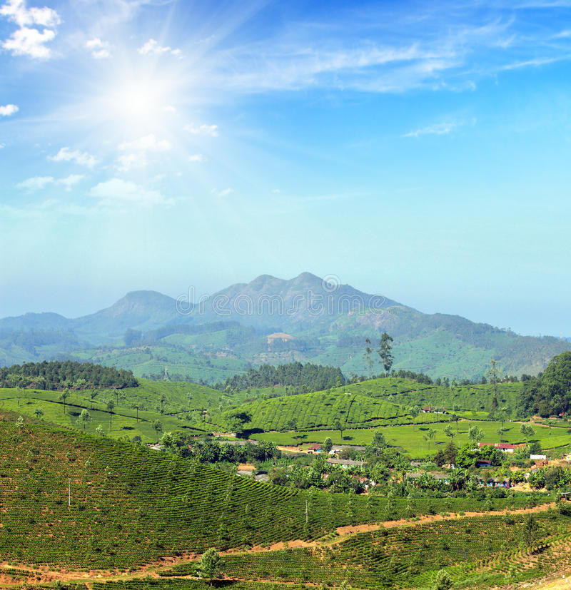Ландшафт плантации чая горы в Индии стоковые фотографии rf