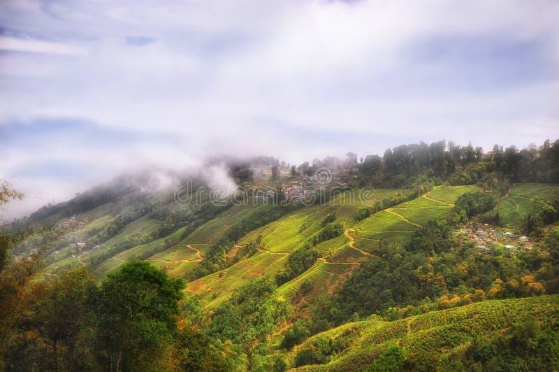 Ландшафт плантации чая на горе в Darjeeling стоковые фото